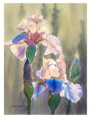Blue Iris Sunshine