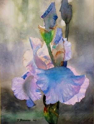 Blue Iris #10 12 x 16 7022015