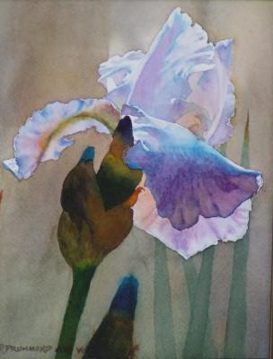 Blue Iris #2 8 x 6 040208 018