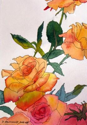 Climbing Roses 6.5 x 4.5