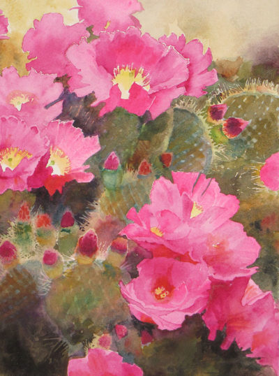 Cactus Flowers by David Drummond