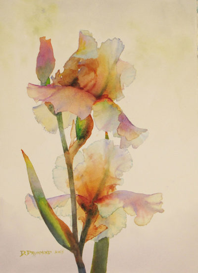 Iris Translucence by David Drummond