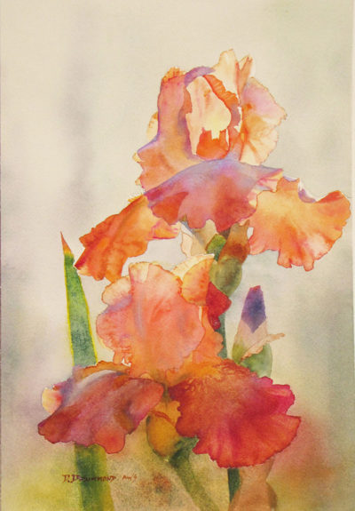 Orange Iris by David Drummond